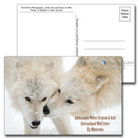 International Wolf Center Brotherly Love Postcard