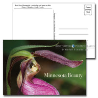 Minnesota Lady Slipper Postcard