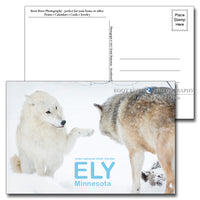 International Wolf Center Paw Beg Postcard