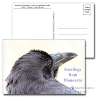 Minnesota Raven Love Postcard