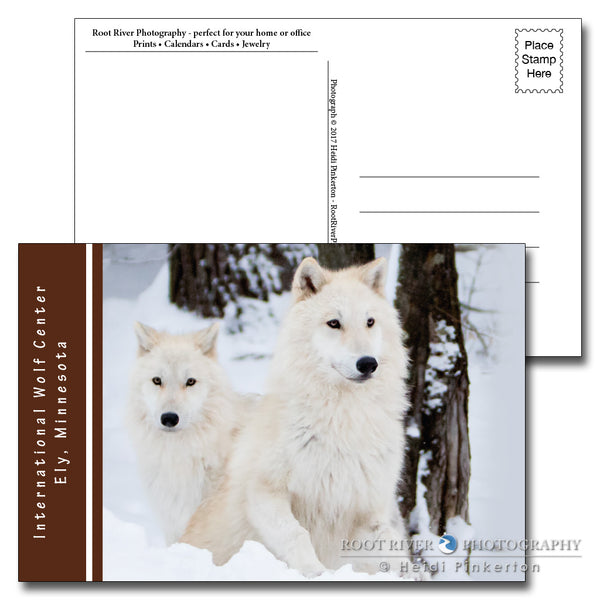 International Wolf Center Winter Pups Postcard
