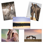 Horses - Variety Pack Horse Collection Greeting Cards