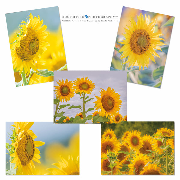 Sunflowers - Variety Sunflower Collection 001 Greeting Cards