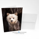 Bears - Cuteness Overload Greeting Card