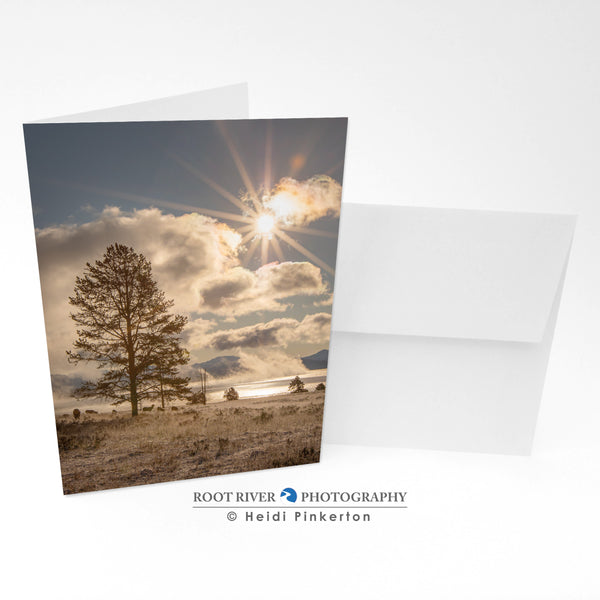 Scenic - Frosty Morning Elk Greeting Card