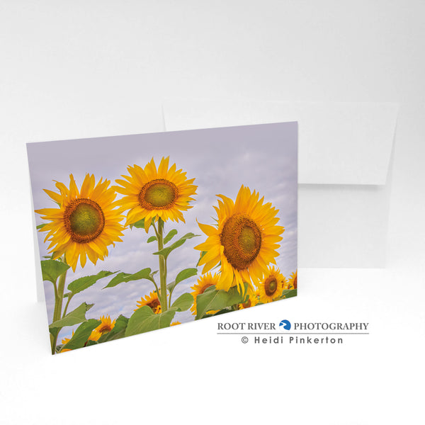 Sunflowers - More Beauty in the Sunshine Field Greeting Card