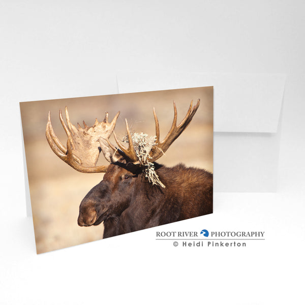 Moose - Sage Decor Greeting Card