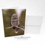 Birds - Squawk Greeting Card