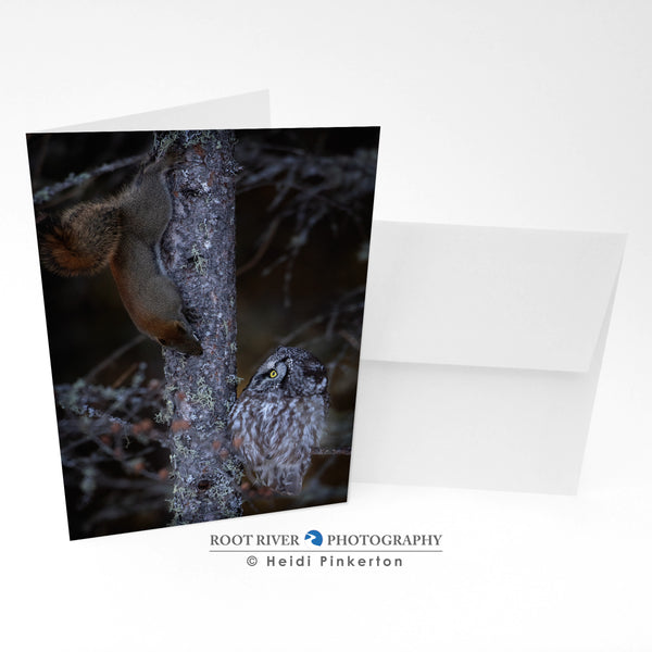 Birds - Squirrel and the Boreal Owl Greeting Card