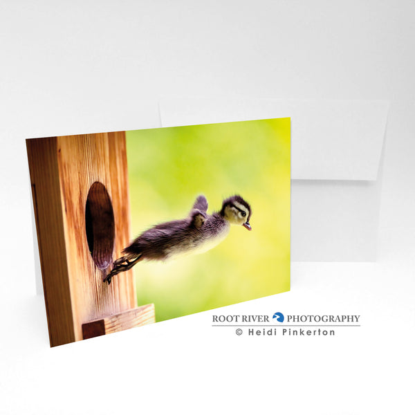 Birds - Taking the Plunge Greeting Card