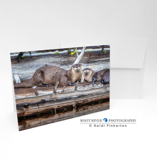 Otters - Two Cute Greeting Card