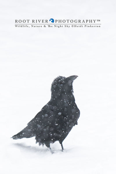 Ω Vertical - Snow Raven