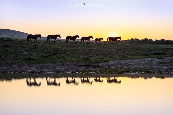Sunrise at the Watering Hole