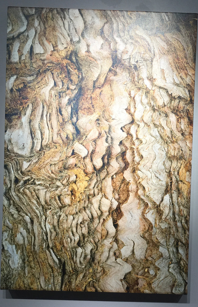 """Coastal Giant Redwood Tree Bark"" by Anne Griffin  $335"