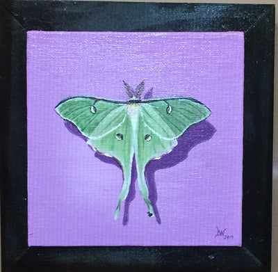 """Luna Moth"" by Denise Najera"