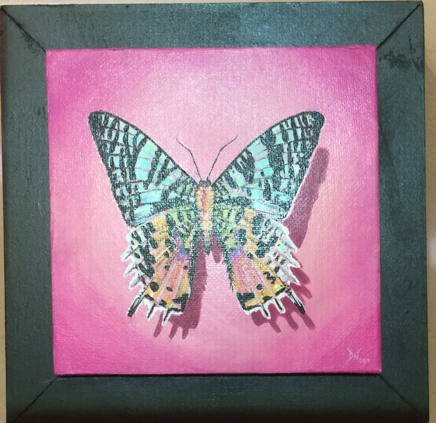 """Madagascar Sunset Moth"" by Denise Najera"
