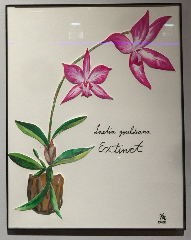 """Laelia gouldiana, Extinct"" by Karen Eliza Aguilar  $50"