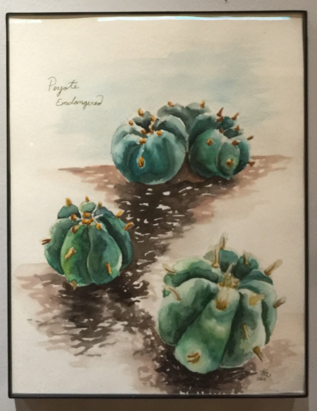 """Peyote, Endangered"" by Karen Eliza Aguilar  $40"