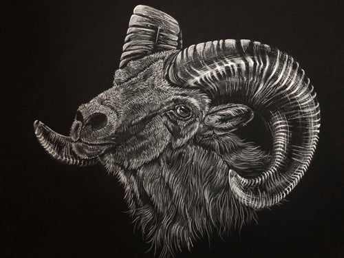 """White Ram"" by Alex Hundemer $100"