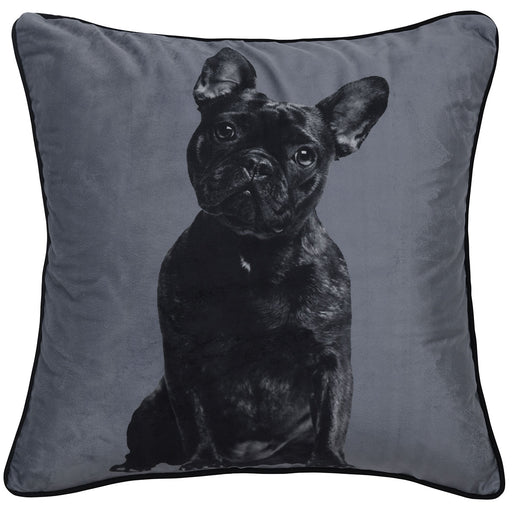 French Bulldog Velvet 43x43 cm Cushion By Bianca