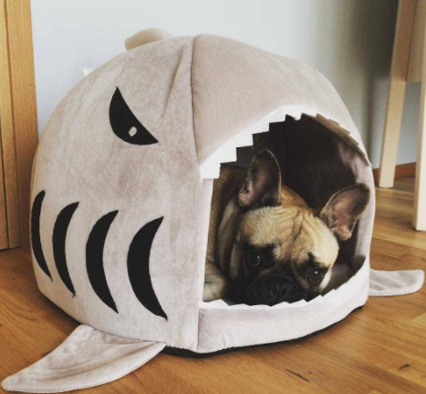 Shark Pet House - Blissful Delirium