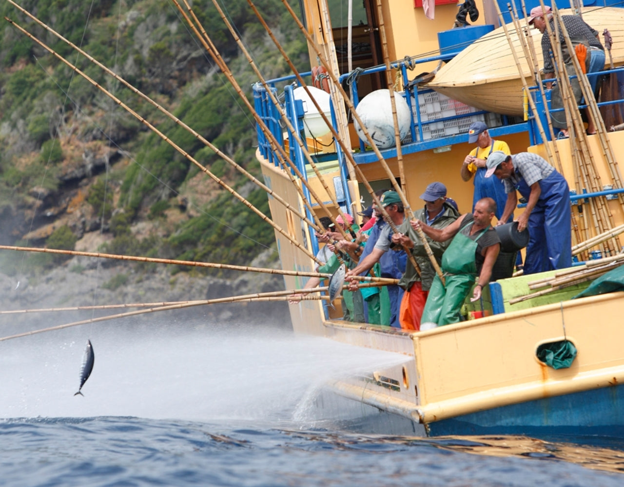 Tuna fishing with hook and line in the Azores