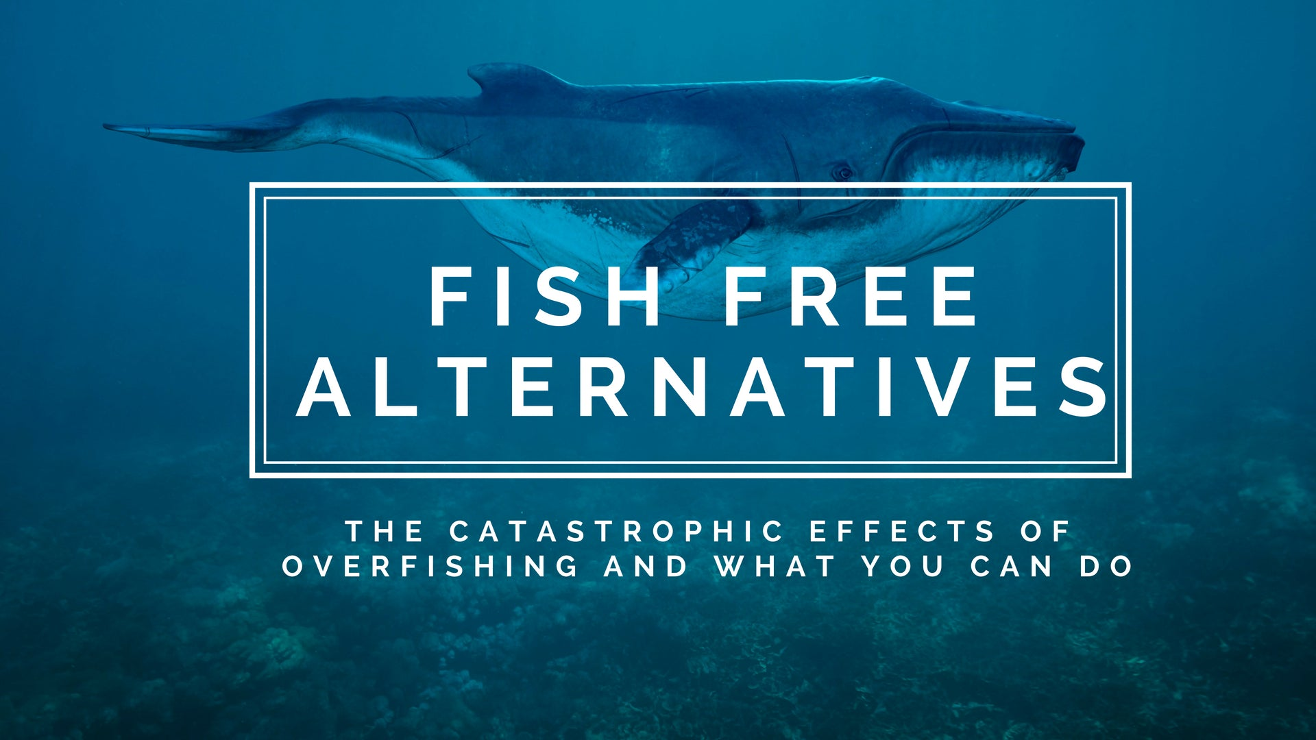 FISH FREE ALTERNATIVES - The catastrophic effects of overfishing and what you can do