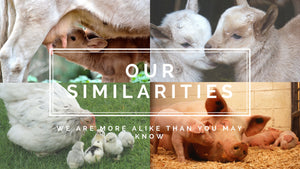 Our Similarities - We are more alike than you may know