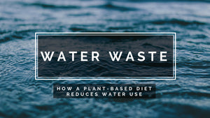 Water Waste - How a Plant-Based Diet reduces water use