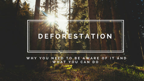 deforestation blog title picture