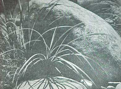 HOW TO PLAN ESTABLISH & MAINTAIN ROCK GARDENS SUNSET BOOK (1964)