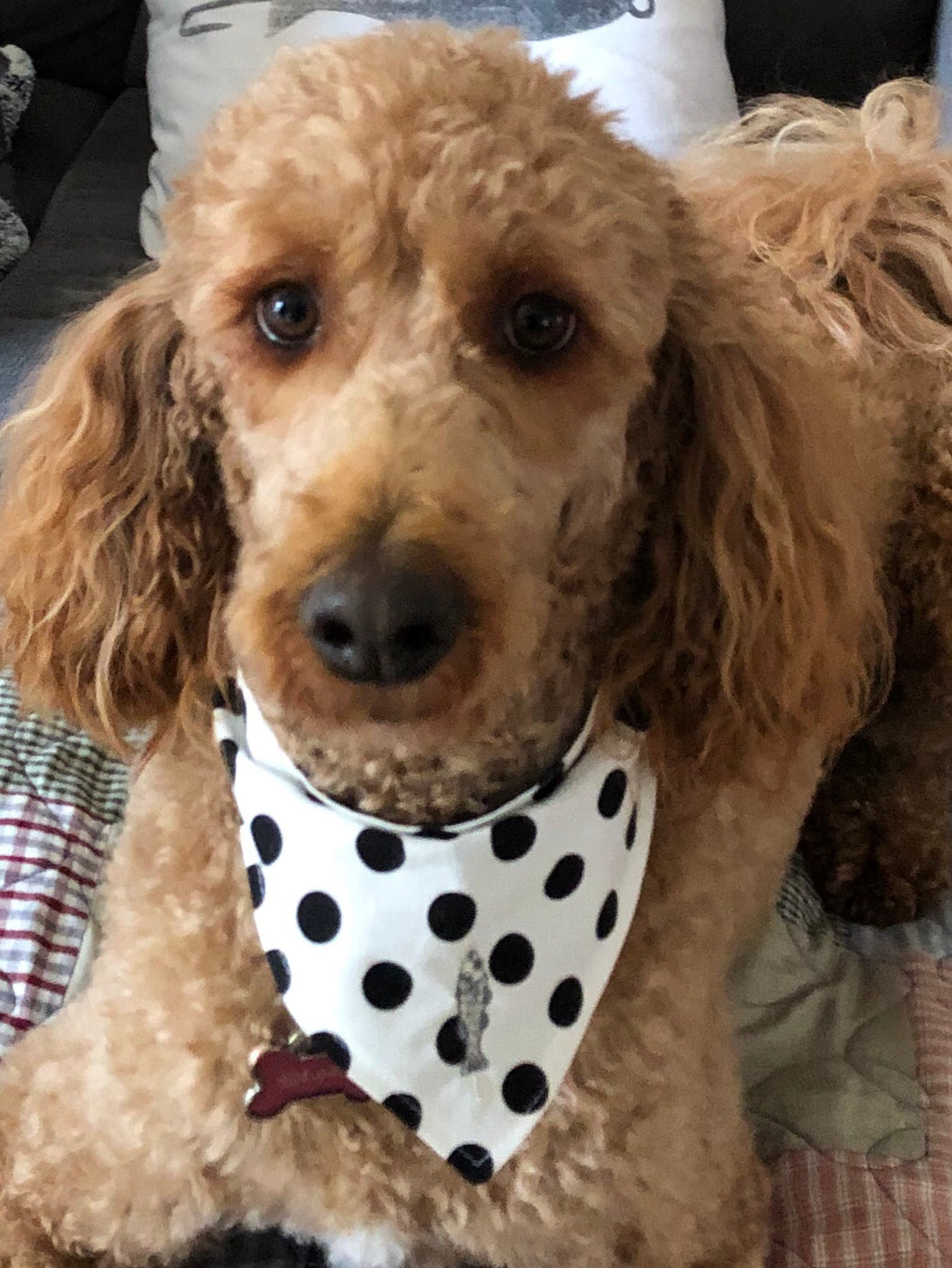 Polka Dot bow wow bandana