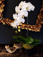 Orchids - Starting at