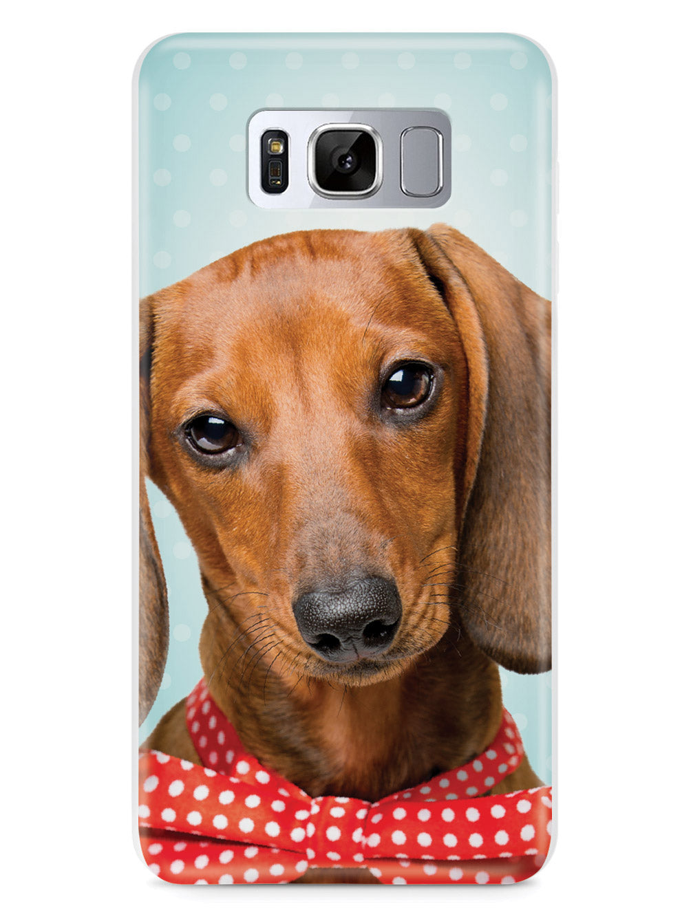 Dachshund and Polka Dots - Real Life Case