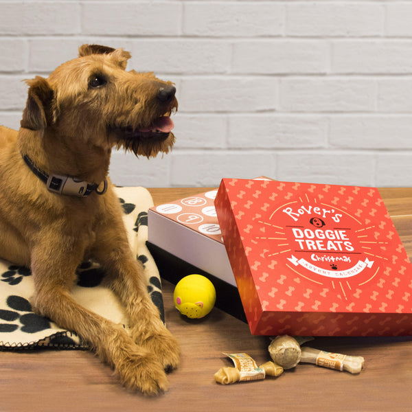 Personalised Dog Treats Advent Box - Rover Layaing Beside His Red Advent Box Waiting For His Next Treat