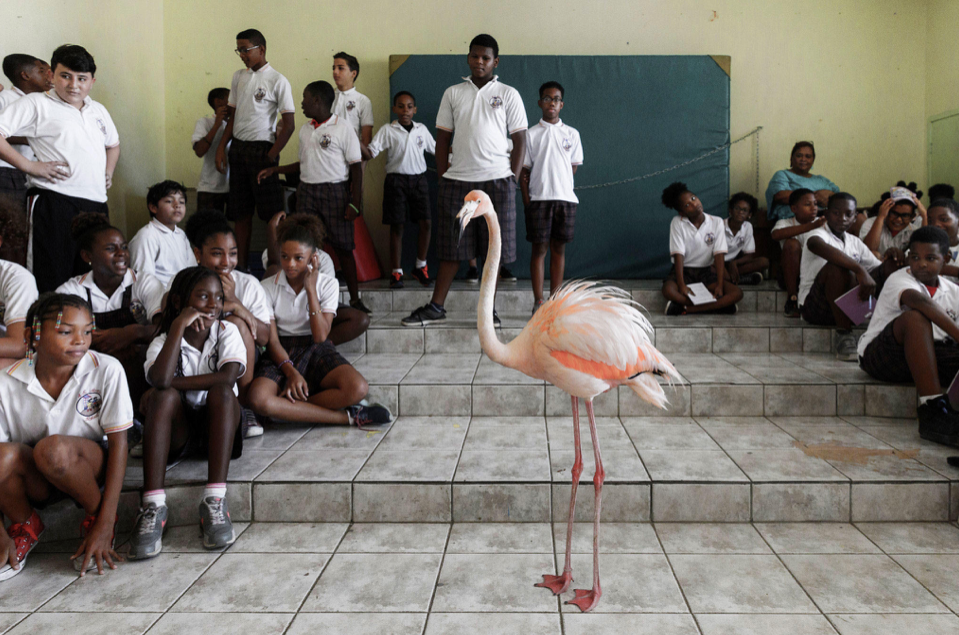 Meet Bob the Flamingo