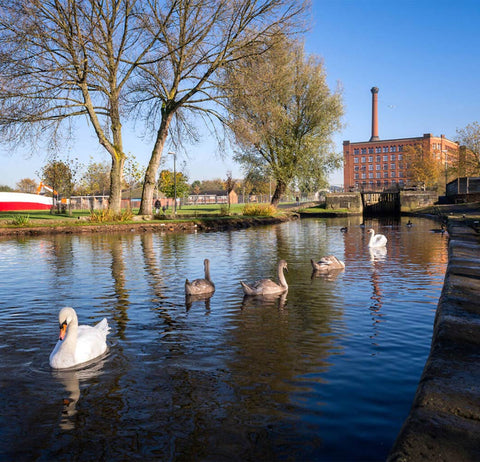ancoats manchester lake with ducks swimming