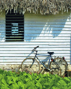 "Victoria Herring: ""Bicycle on Farm, Vinales, Cuba"""