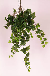 D234552 GREEN HANGING IVY