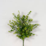 "AG13539 - 20"" New Boxwood Bush x 9"
