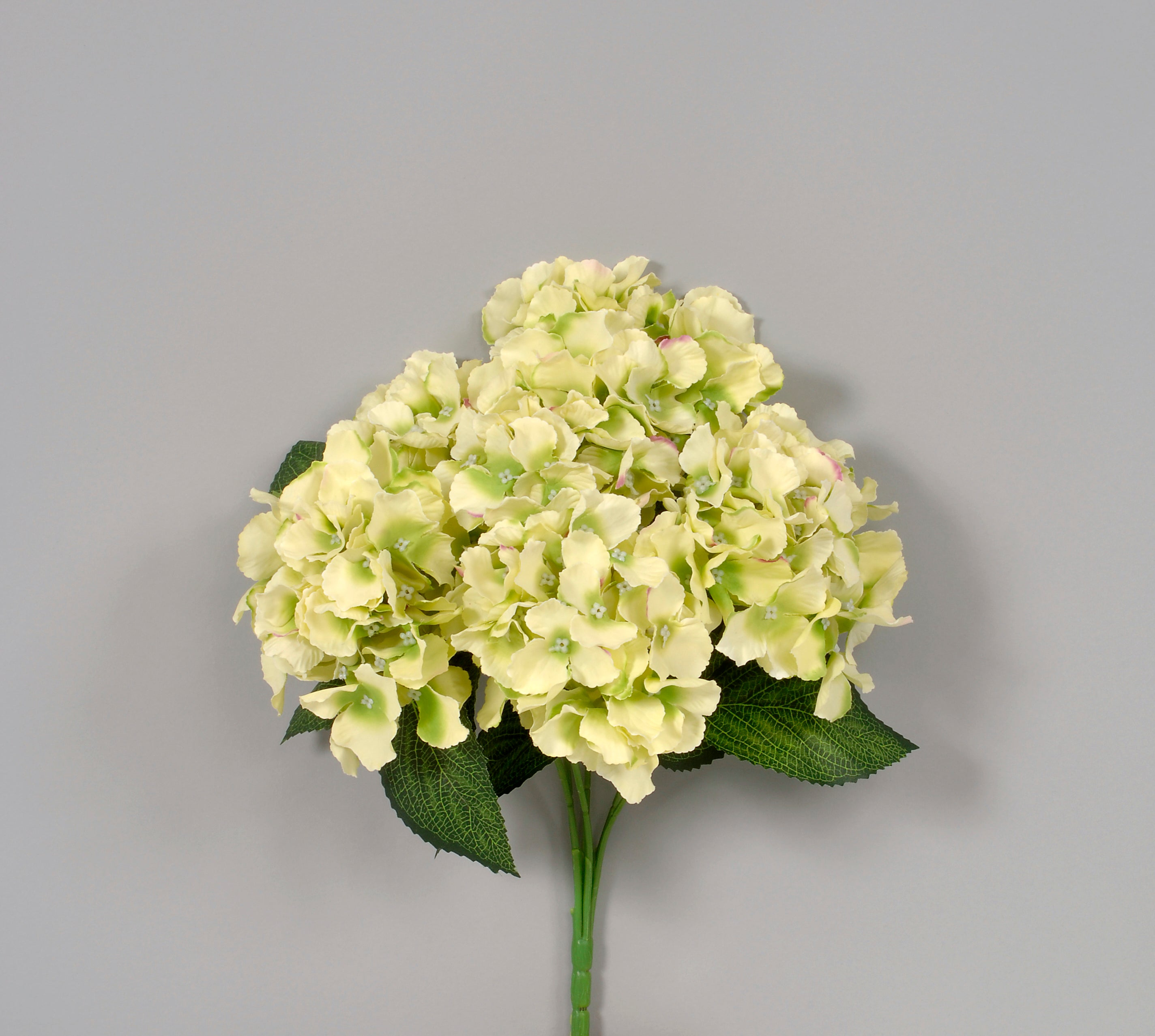 "AS31643 CRM 16"" HYDRANGEA BUSH"