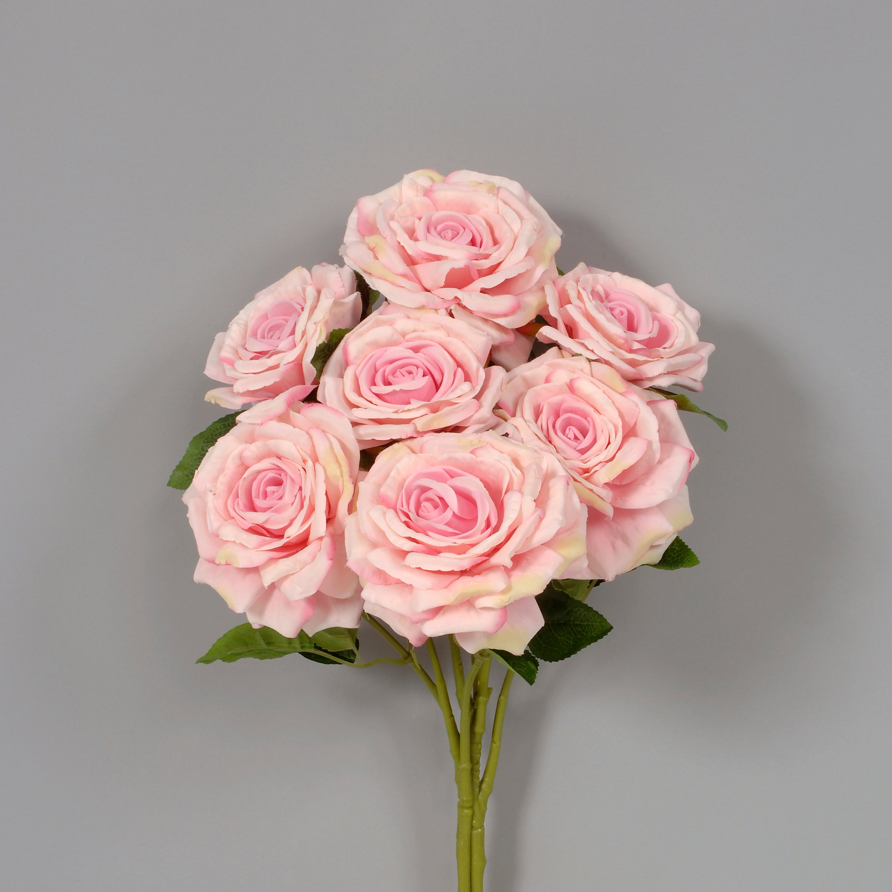 "AS31644 PINK - 20"" Rose Bush - Pink"