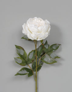 "AS31891 30"" FROSTED PEONY WHITE"