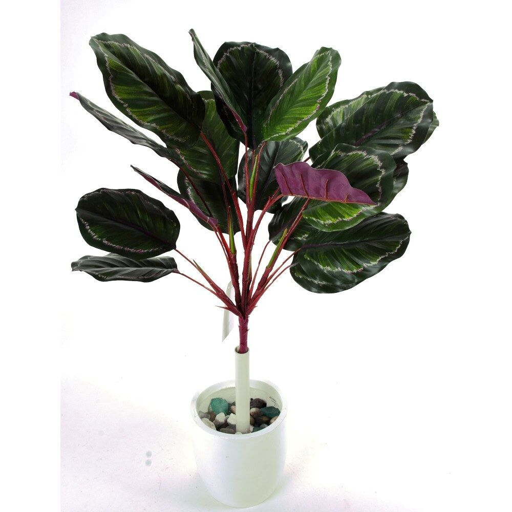 "D287432 GREEN/BURG 24"" CALATHEA BUSH"