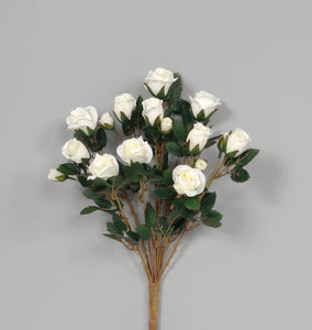 "AS23938 CRM 16""ROSE BUD BUSH"