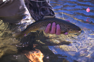 Fishing & Colorado - Find the best times and spots to cast your line!