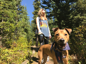 Can Fido Come? 5 Things to Consider Before Adventuring With Your Dog