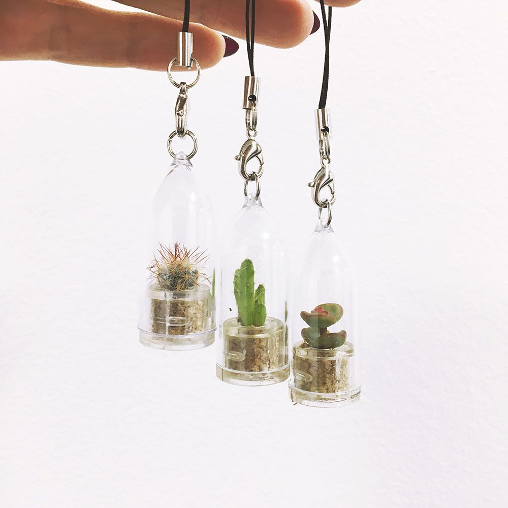 Grow Your Own Cactus / Succulent Keyring
