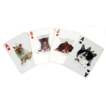 Cats 3D playing cards Home KIKKERLAND - Brand Academy Store