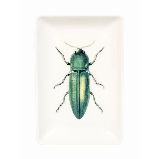 Trinket tray with green beetle illustration Home cubic - Brand Academy Store